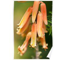 Flower Bells Poster