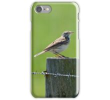 Australasian (Richards) Pipit iPhone Case/Skin