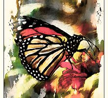 Monarch on Zinnia by suzannem73