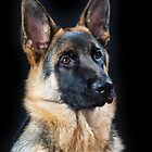 German Shepherd Dog, #12 by Chris Cobern