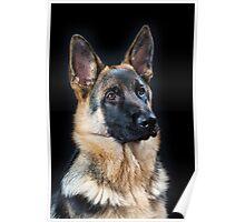 German Shepherd Dog, #12 Poster