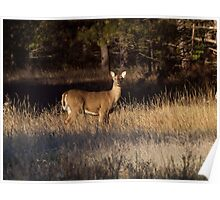Whitetail Doe Poster