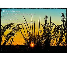 Flesh Flowers and The word of The Lord Photographic Print