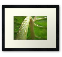 Green Arc Framed Print