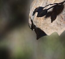 Leaf Shadows by vigor