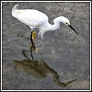 Snowy Egret Stalking by Mikell Herrick