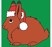 Red Arctic Hare with Christmas Red Santa Hat Photographic Print