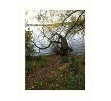 Tree, Green Lake, Seattle, Washington Art Print