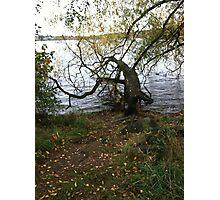 Tree, Green Lake, Seattle, Washington Photographic Print