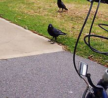 Two Crows 04 11 12 by Robert Phillips