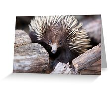 Meet Ernie the Echidna Greeting Card