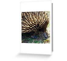 Ernie The Echidna Greeting Card