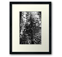 Mt. Baker National Forest Framed Print