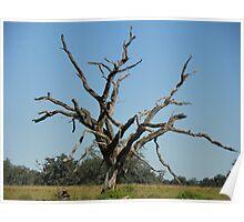 Petrified Tree Poster