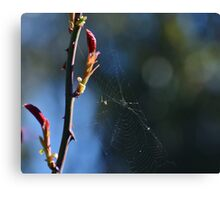 Just another fly in a web Canvas Print