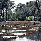 Pamplemousses Garden Pond by tropicalsamuelv