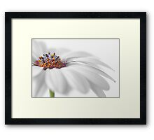 White daisy Framed Print