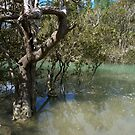 Mangroves..........! by Roy  Massicks