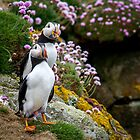 Puffins (I), Lunga Island, Scotland by JourneyPhotos