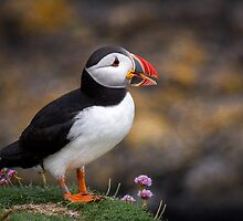 Puffins (V), Lunga Island, Scotland by JourneyPhotos