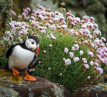 Puffins (VII), Lunga Island, Scotland by JourneyPhotos