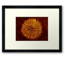 Dandelion Amber Glow Framed Print