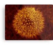 Dandelion Amber Glow Metal Print