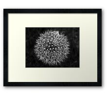 Dandelion Dream Framed Print