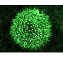 Dandelion Green Photographic Print