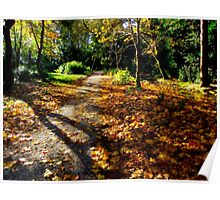 Autumn woodland path. Poster