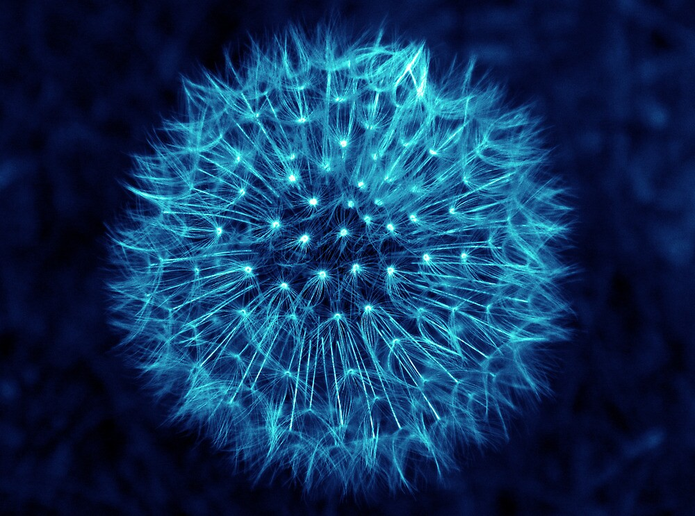 Dandelion Ink Blue by DavidWHughes