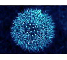 Dandelion Ink Blue Photographic Print