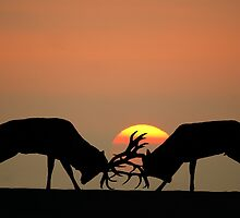 The Rut by Steve Adams