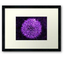 Dandelion Lavender Framed Print