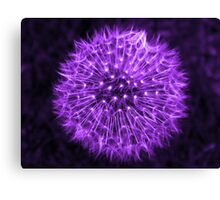 Dandelion Lavender Canvas Print