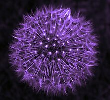 Dandelion Purple by DavidWHughes
