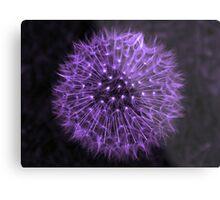 Dandelion Purple Metal Print