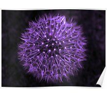 Dandelion Purple Poster