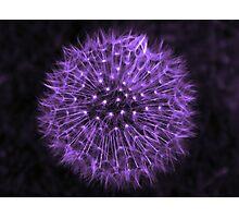 Dandelion Purple Photographic Print