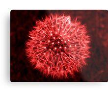 Dandelion Red Metal Print