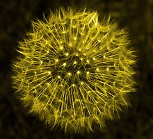 Dandelion Yellow by DavidWHughes