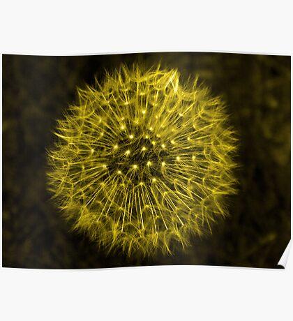 Dandelion Yellow Poster