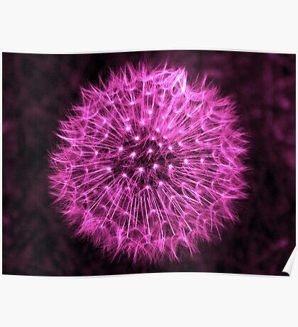 Dandelion Violet Poster