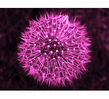 Dandelion Violet Photographic Print