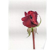 """Red Rose Bud - """"Red Cross"""" Poster"""