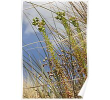 Windy Day Poster
