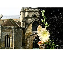 Abbey Flower in August Photographic Print