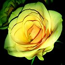Yellow Rose by Sian Houle