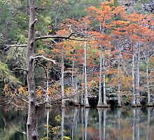 Autumn In The Cypress Swamp by Carolyn  Fletcher