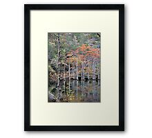 Autumn In The Cypress Swamp Framed Print